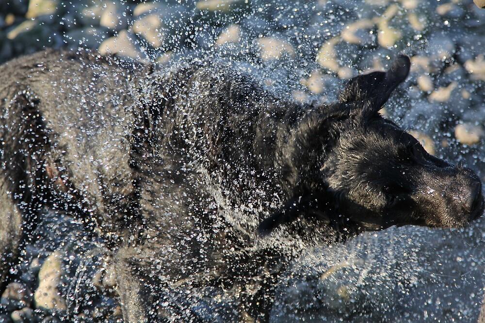 Black Labrador Dog Water Shake by tallmancreative