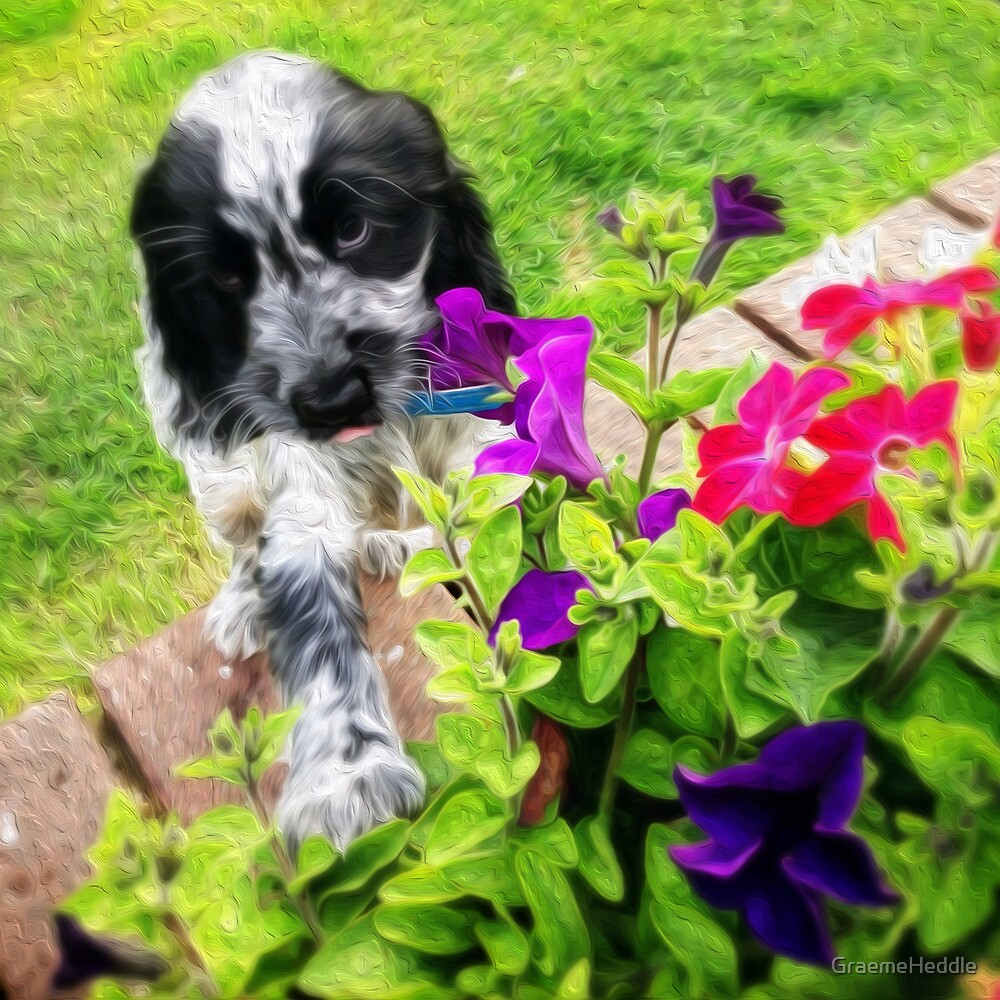 Eli and the Flowers by GraemeHeddle