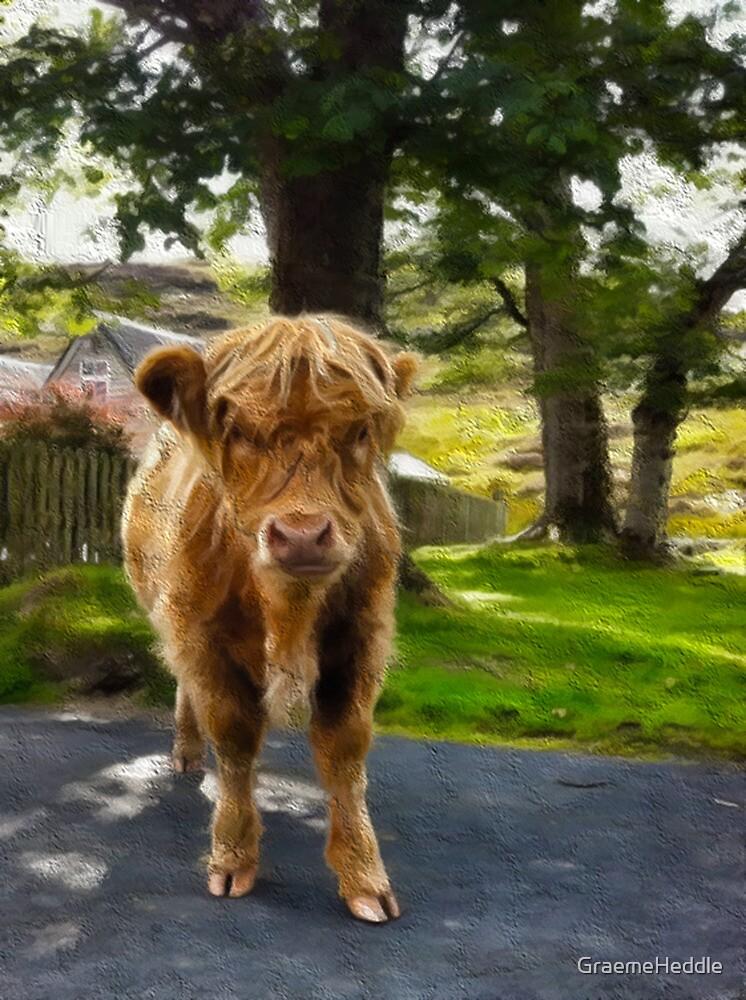 Highland Calf by GraemeHeddle