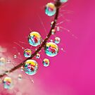 Smoking Pink Drops by Sharon Johnstone