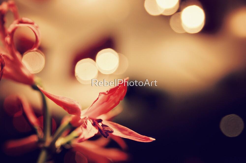 A Flower-Bokeh by RebelPhotoArt