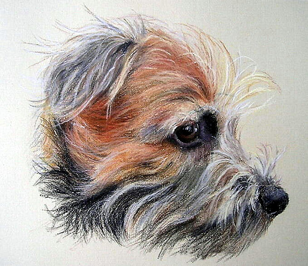 Border Terrier Dog Portrait by Oldetimemercan