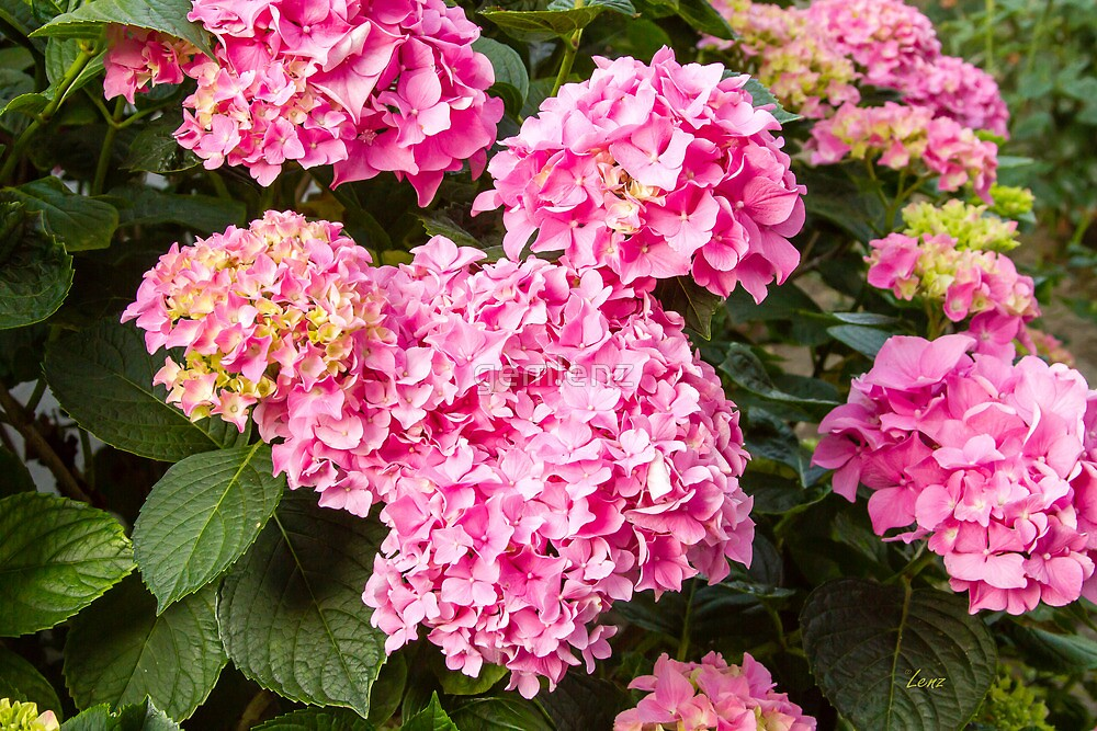 Pretty Flowers by gemlenz