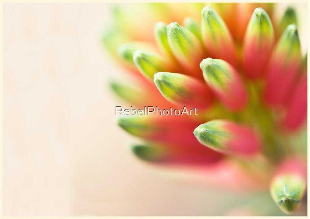 Funky Flora by RebelPhotoArt