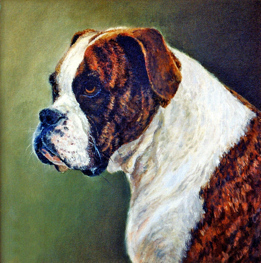 Boxer Dog Portrait by Oldetimemercan