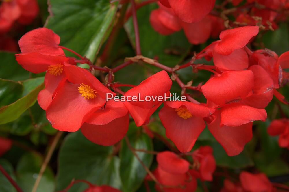 Red TN Wildflowers by PeaceLoveHike