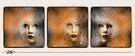 Painted Ladies by Ted Byrne