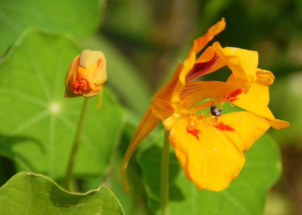 Summertime Flowers by Fields Soumis Hyrkas