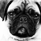 My pug Milo by Shawty's Photography