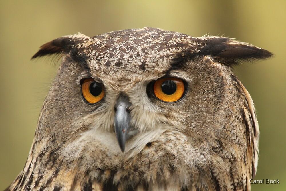 Owl by Carol Bock