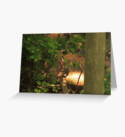 Baby Wild Turkeys Greeting Card