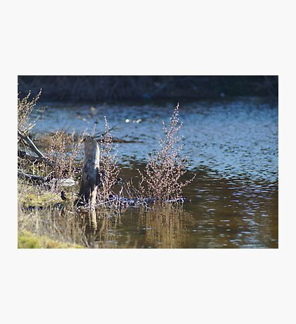 Thoughts Of Tranquility. Photographic Print