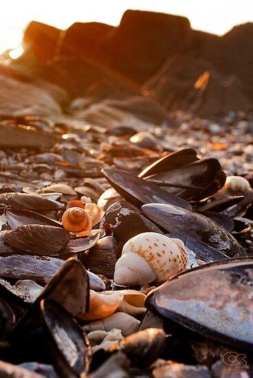 Sunset Shells by CollinScott