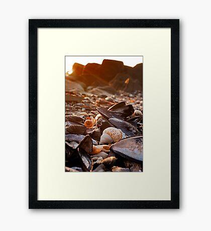 Sunset Shells Framed Print