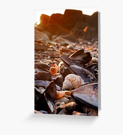 Sunset Shells Greeting Card