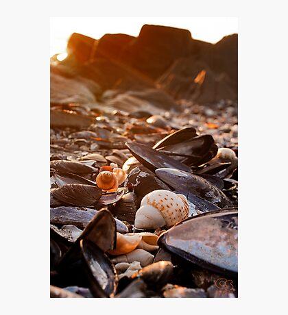 Sunset Shells Photographic Print
