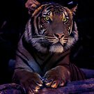 Tigress by Ageness