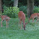 Mommmy Deerest and Her Twin Fawns by Ron Russell
