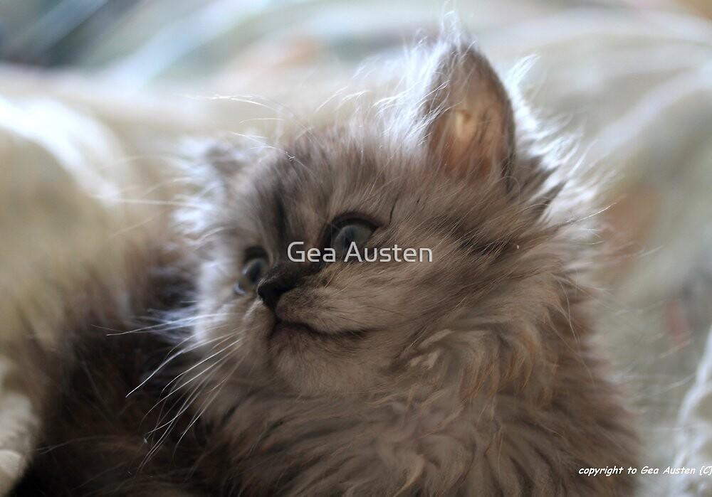 kitten light  by Gea Austen