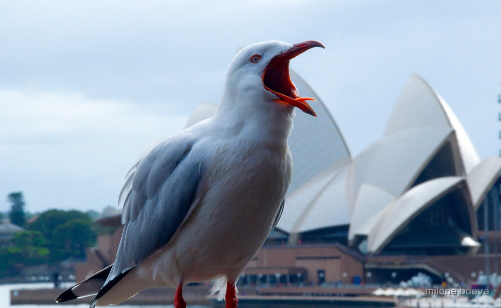 seagull at the opera house by milena boeva