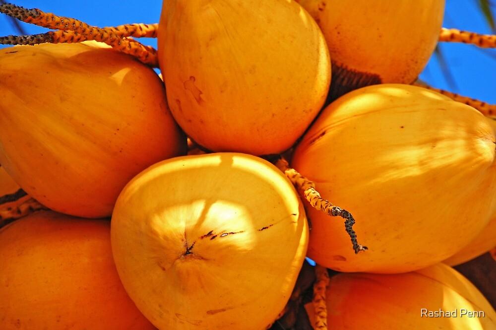 Golden Coconuts bundle by Rashad Penn