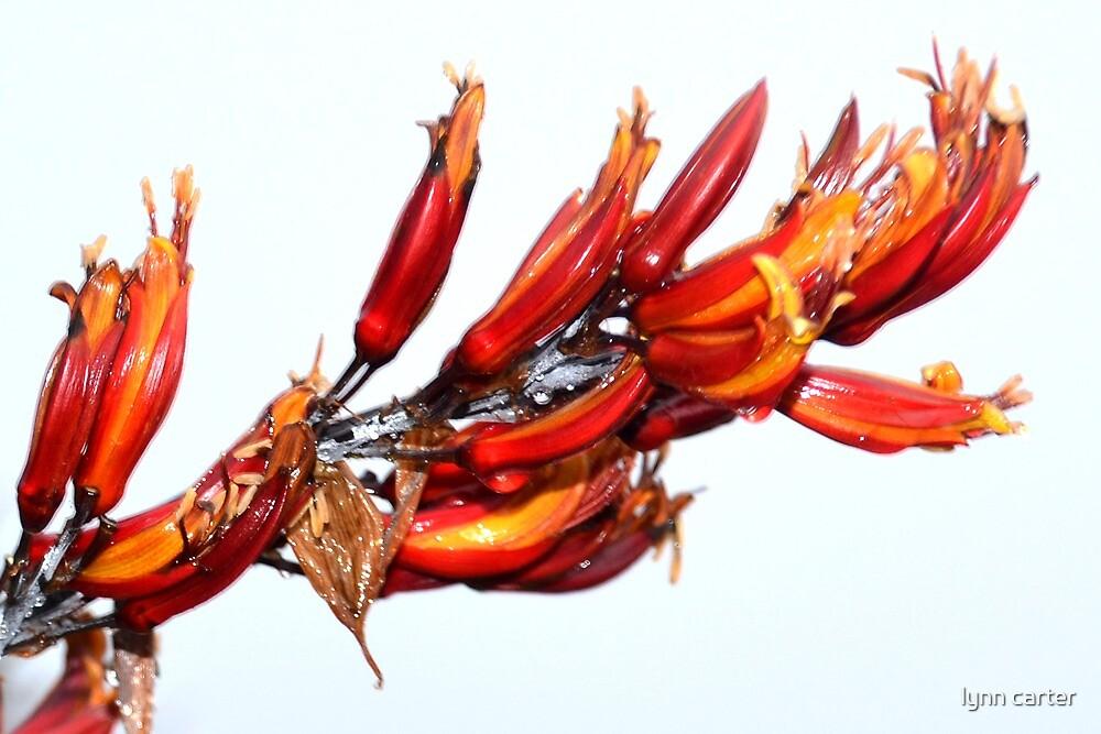 Phormium tenax or New Zealand Flax plant by lynn carter