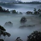 Autumn Mist... by debsphotos