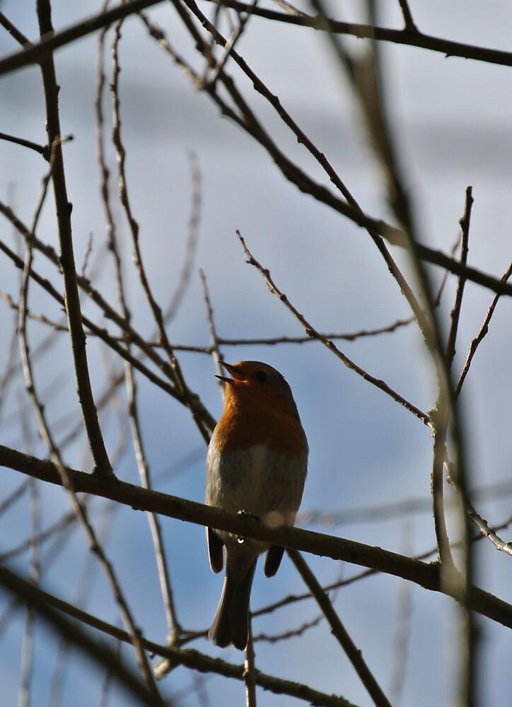 Singing Bird by photosbyJT