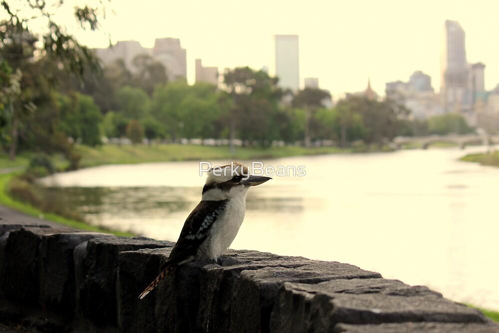 Kookaburra in Melbourne by PerkyBeans