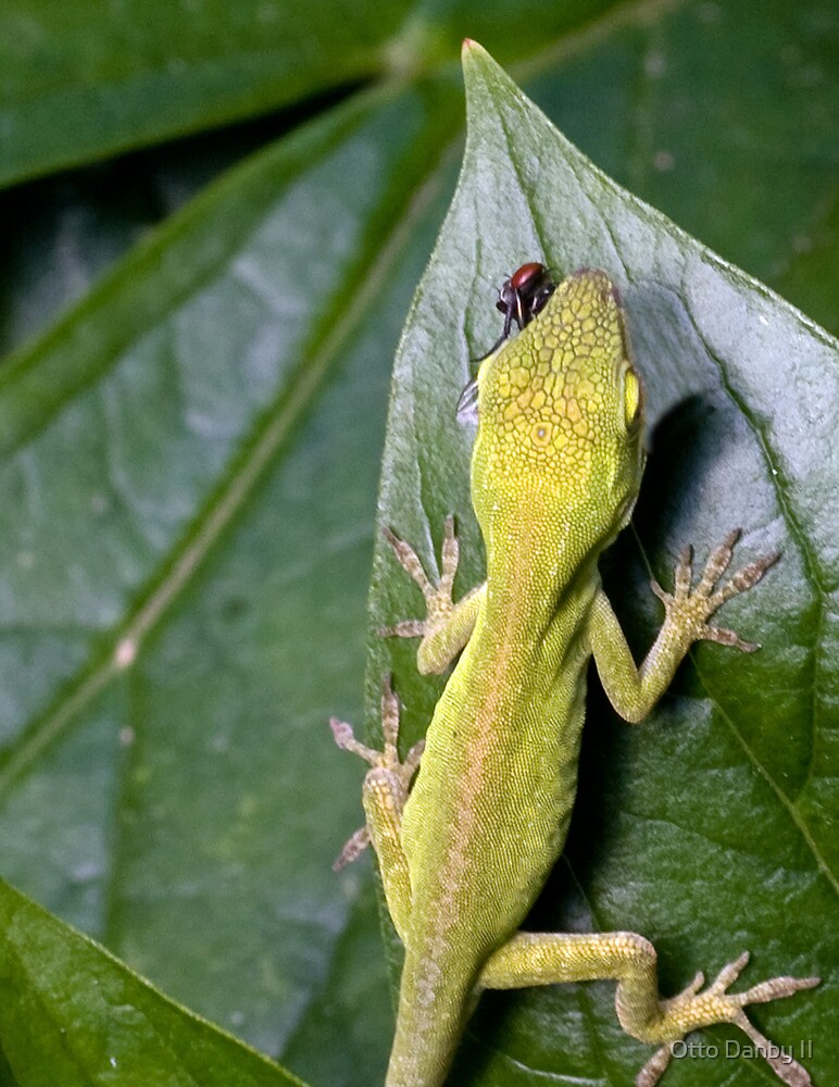 Green Anole with Fly by Otto Danby II