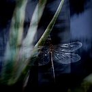 Dragonfly Dreaming  by Louise Linossi Telfer