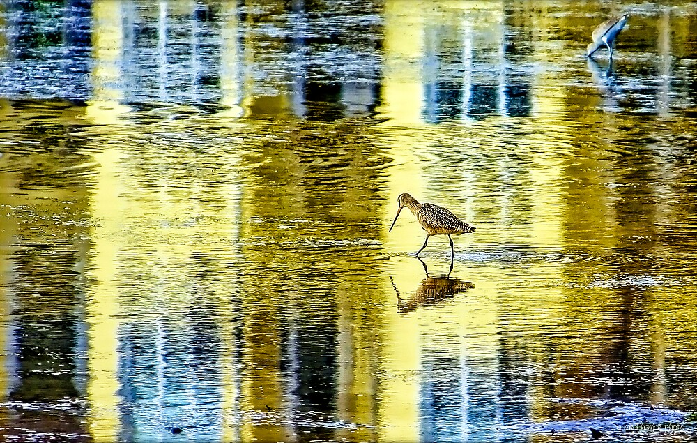 Wading in the Mirror of Low Tide  by Mikell Herrick