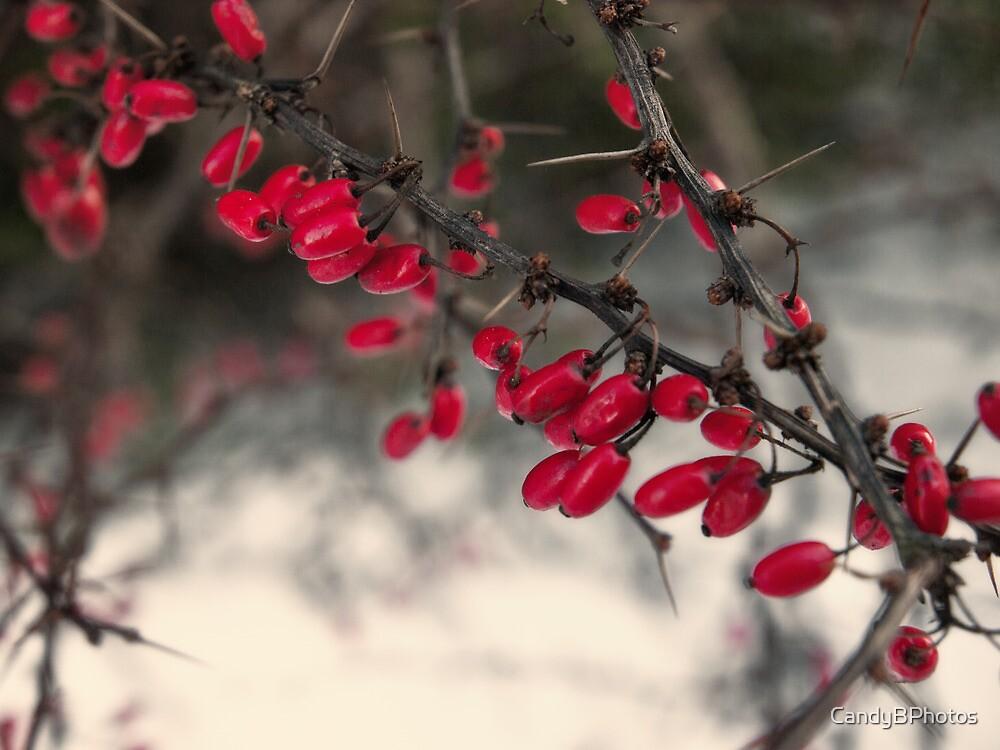 Thornberry by CandyBPhotos