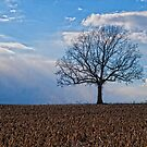 Tree by CandyBPhotos