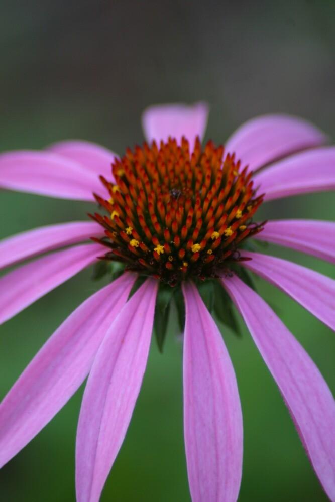 Purple flower by Robert Taylor
