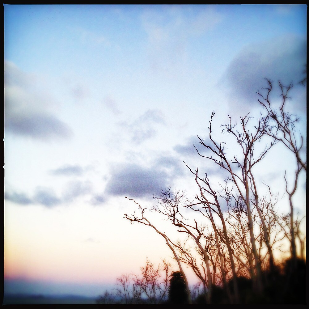 Sunrise Over Trees by Niki Smallwood