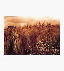 A rural view Photographic Print