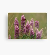 Lupin attracting the bees Metal Print