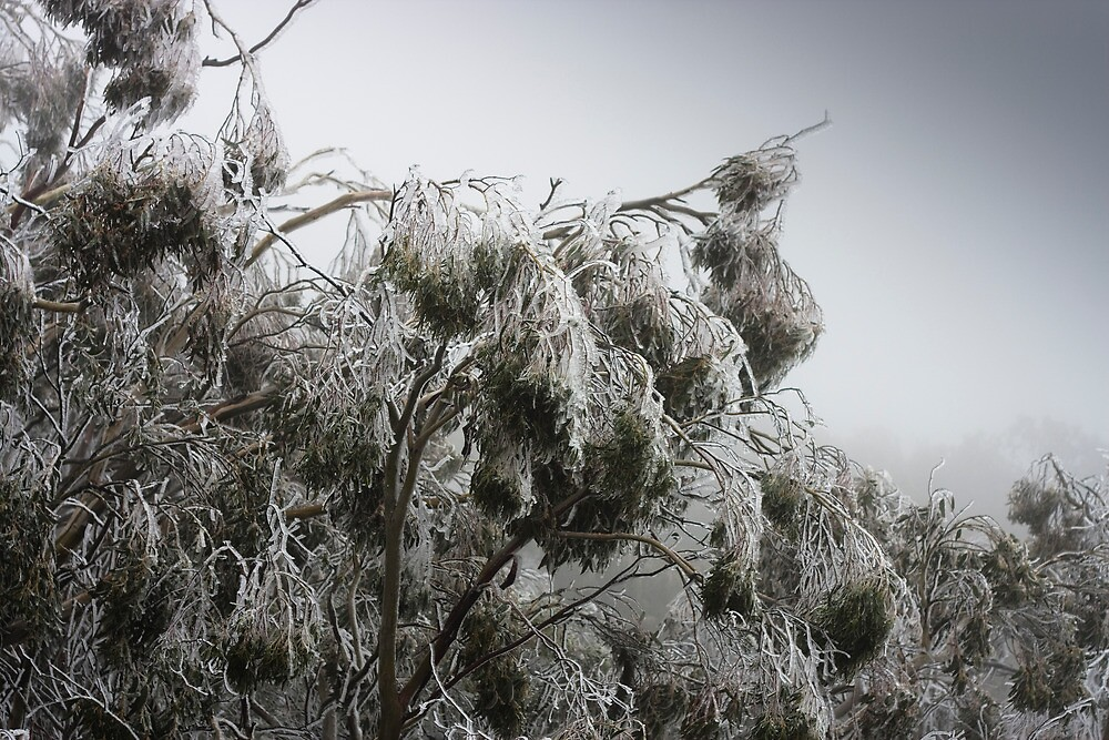 Gum Tree frost by Madmick19