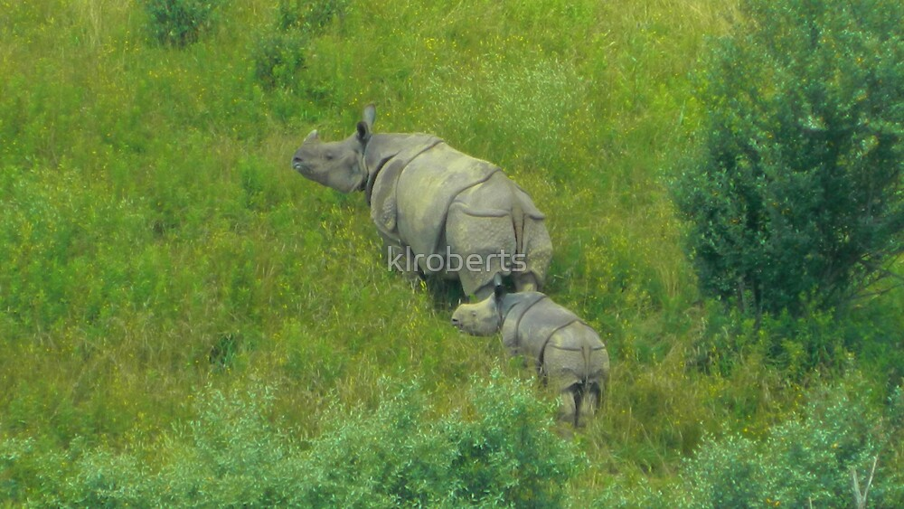 Mother and Daughter Rhinos by klroberts