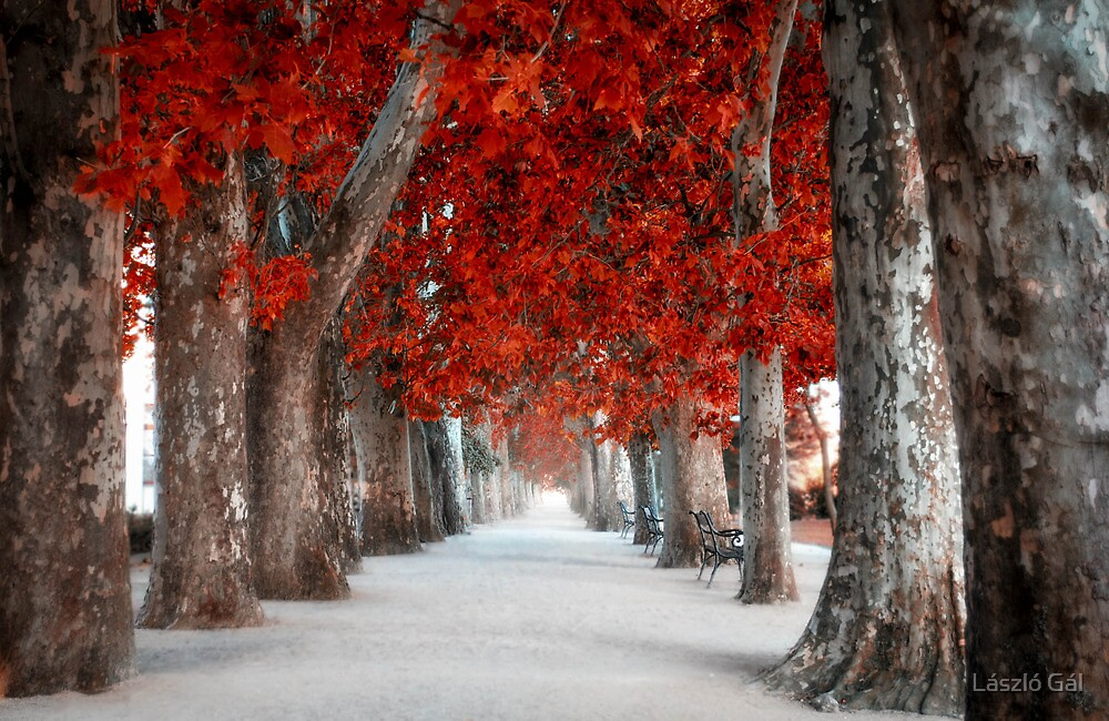 Walk with me by László Gál