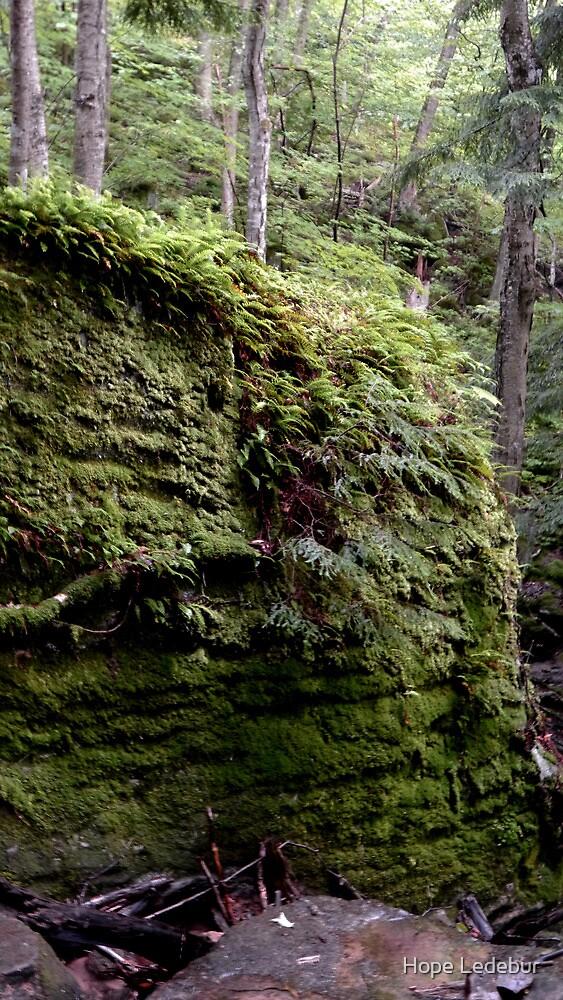 Fern Covered Rocks by Hope Ledebur