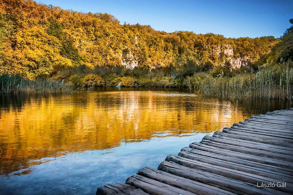 Path to the lake by László Gál