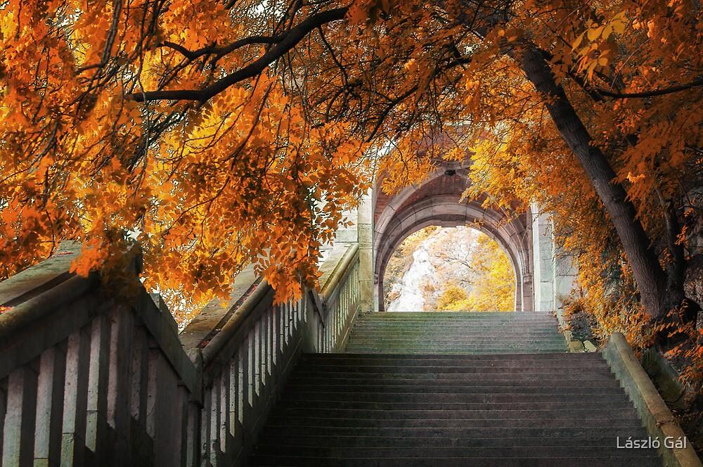 Autumn colors by László Gál