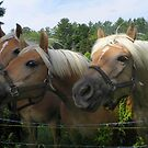 We KNOW you have carrots! by MaryinMaine
