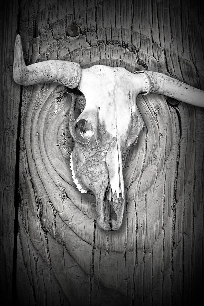 Steer Skull on woodgrain background  by Randall Nyhof