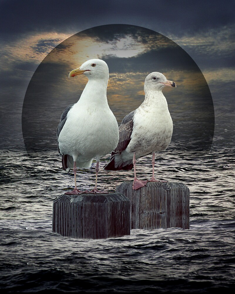 Two Gulls, Gertrude and Heathcliff by Randall Nyhof