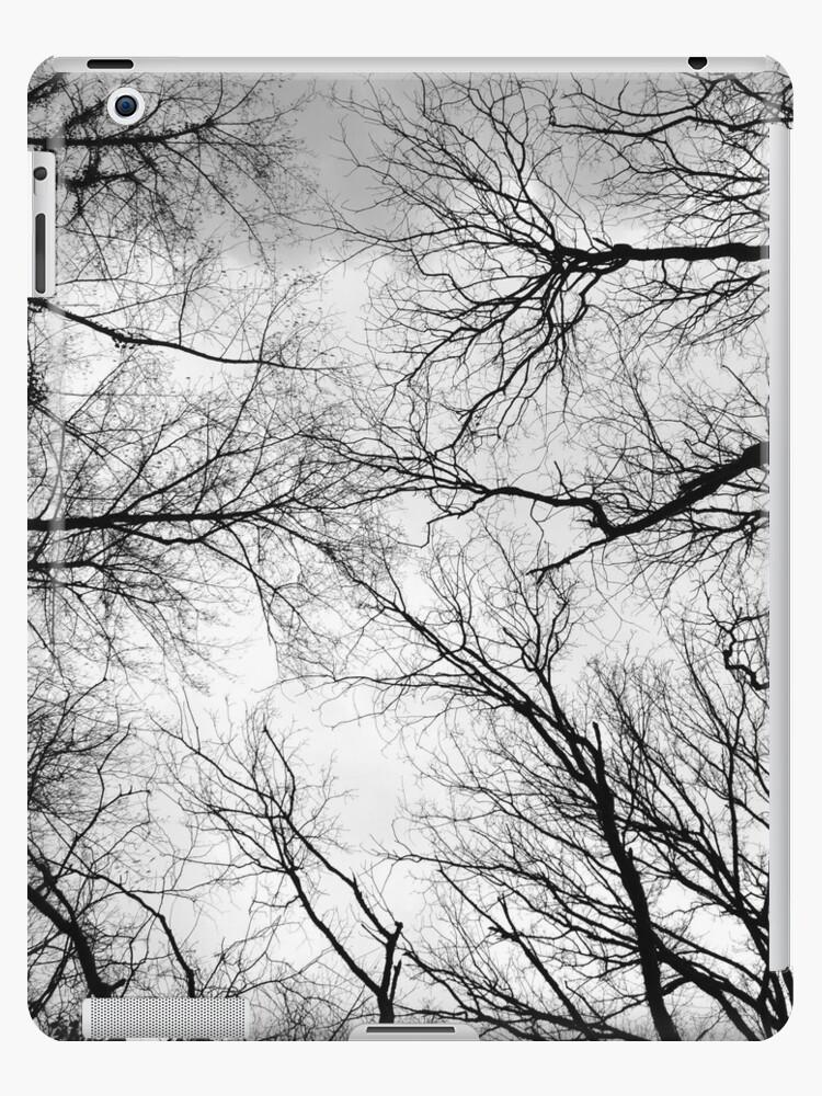 Woods by DanaDaniaud