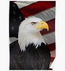 Mr. Bald Eagle Poster