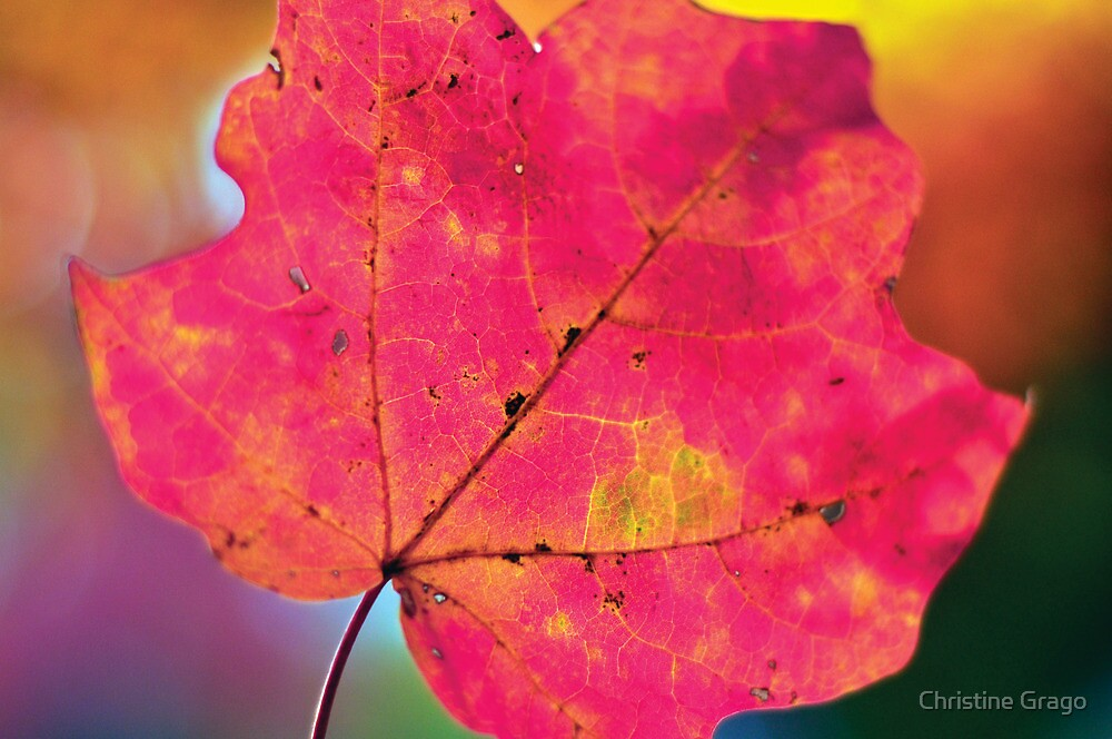 The Colors of Fall by Christine Grago